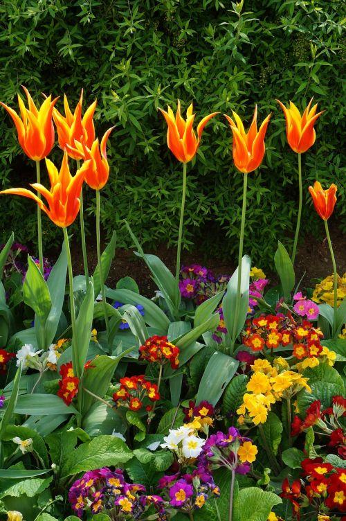 paris flower garden