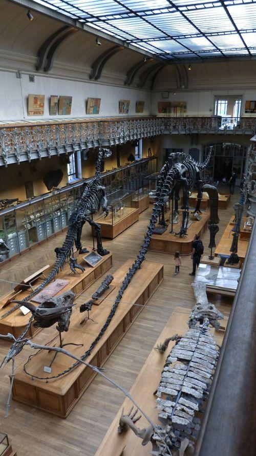 paris museum dinosaur
