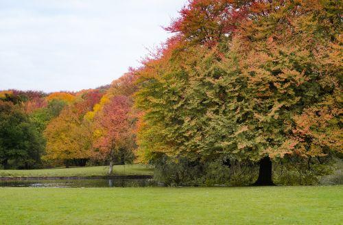 park foliage trees
