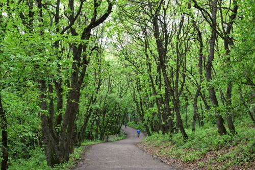 park forest nature