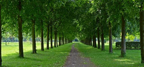 park avenue walk