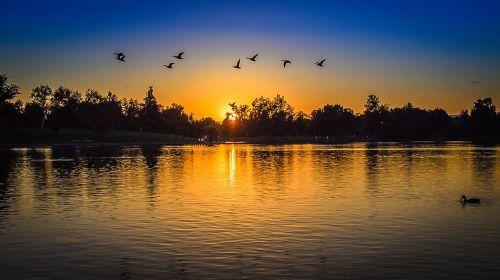 park day ducks