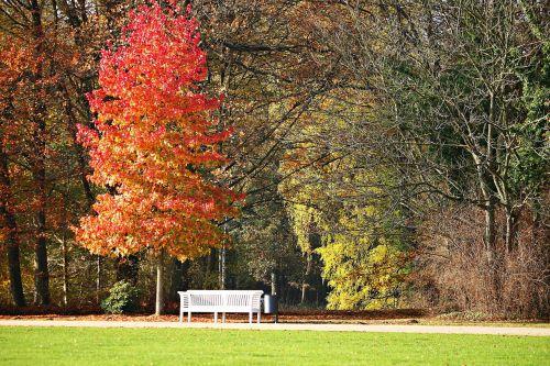 park bank autumn