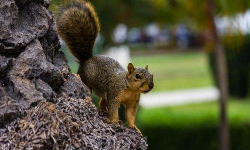 park tree balboa park