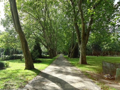 park,away,tree,trees,green,rest,idyll