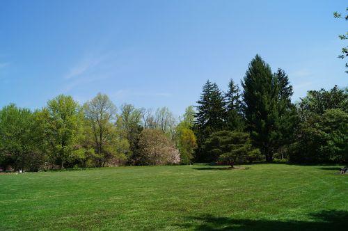 parkas,kiemas,medžiai,kraštovaizdis,apželdinimas,manikiūras,veja,žolė,laukas,lauke,lauke,lauke,sodas,galinis kiemas