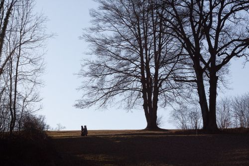 park trees walkers