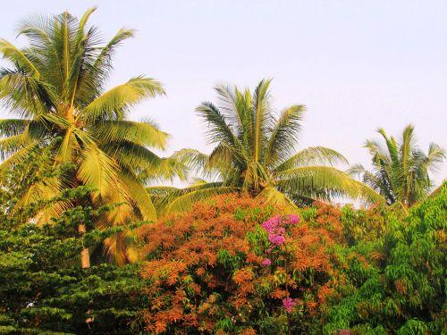 park sadhankeri trees
