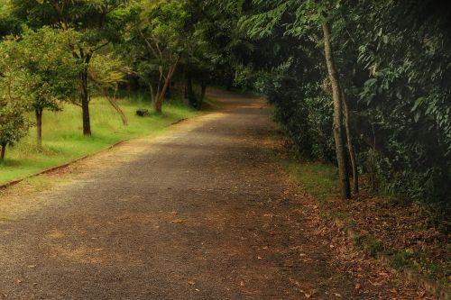 parkas,ekologinis,juostos,žemė,gamta,skraidantis,bagažinė,žali lapai,senas medis,filialas,žalia brazilija,Brazilija