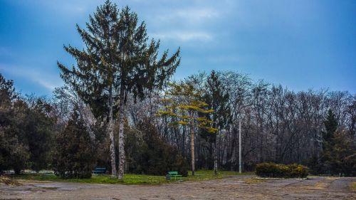 park odessa trees