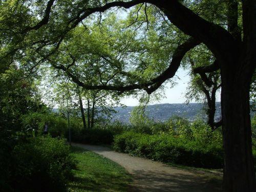 park stuttgart tree