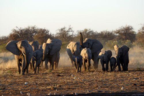 park etosha namibia
