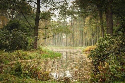 park  pond  tree