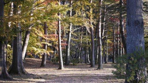 park  woods  natural