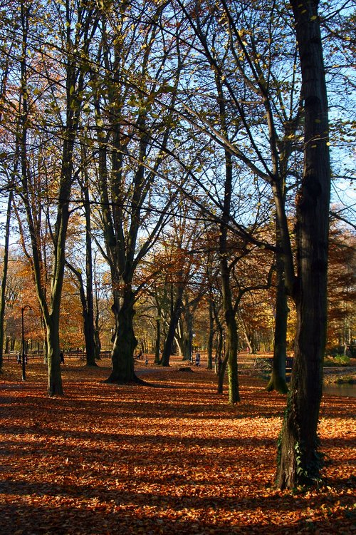 park  natura  landscape
