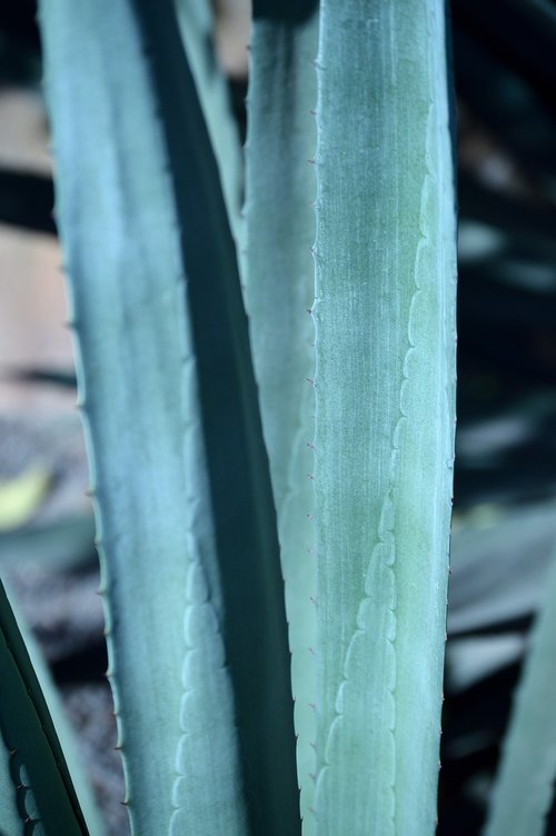 park  outdoors  agave