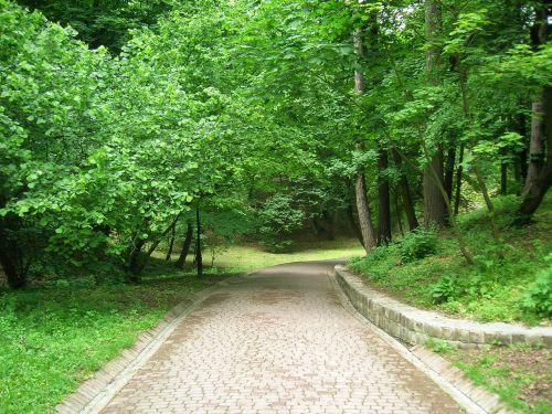 parkas,miestas,medžiai,miesto parkas,parkai,kraštovaizdis,gamta,augalai