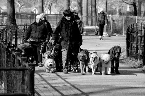 park dog walk
