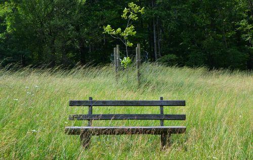 park bench grass sit
