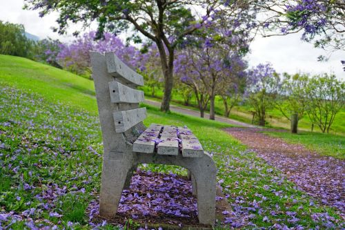 parko suoliukas,jacaranda,violetinė,žalias