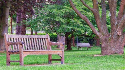 park bench  bank  wood