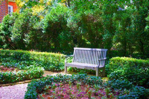popietė, grožis, stendas, krūmai, gėlė, gėlė & nbsp, sodas, sodas, augimas, stebėti, parko & nbsp, stendas, atsipalaiduoti, krūmynai, saulėtas, zen, parko stendas gėlių sode