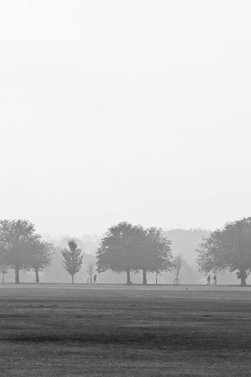 rūkas, rūkas, kraštovaizdis, migla, miglotas, rytas, mįslingas, paslaptis, gamta, lauke, parkas, peizažas, sezonas, dangus, medis, medžiai, parkas rūkas
