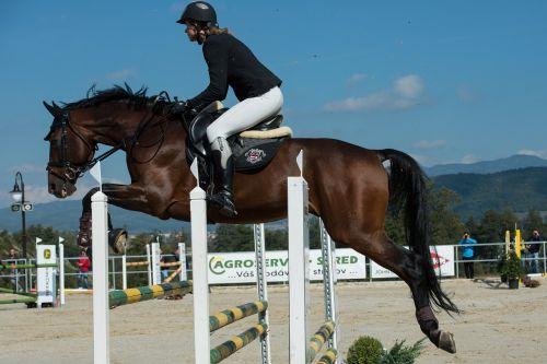 parkúr jumping horse