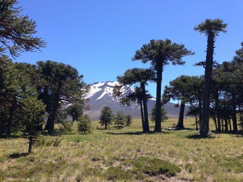 parque nacional los araucarias chile argentina