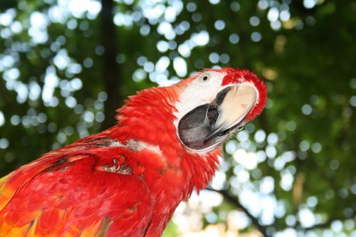 parrot question confused