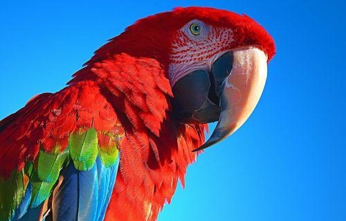 parrot bird pet