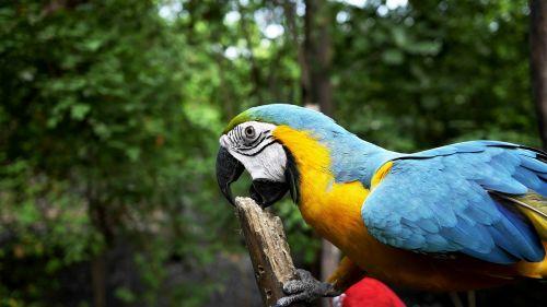 parrot bird forest