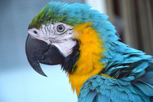 parrot colorful parrot bird