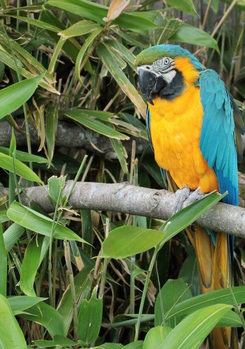 parrot macaw bird