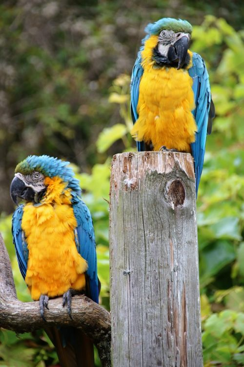 parrot macaw tropical
