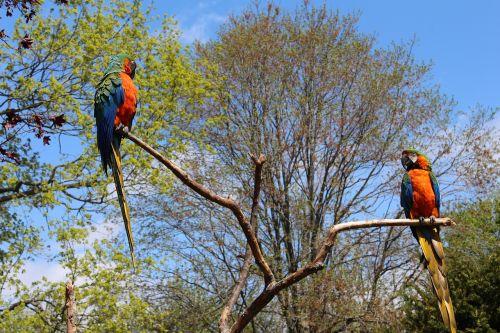 parrot bird tropical