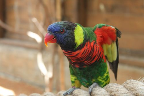parrot animal red