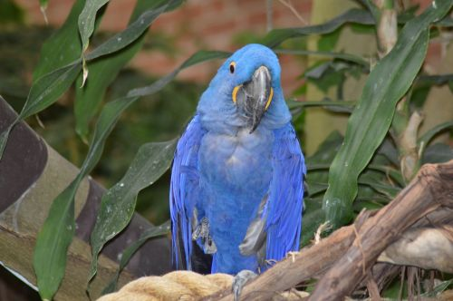 parrot blue national aviary