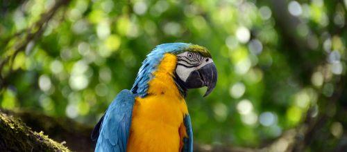 parrot ara bird