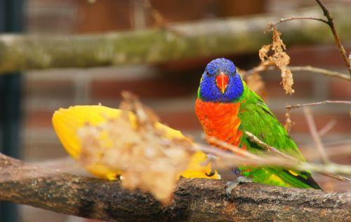 parrot colorful bird