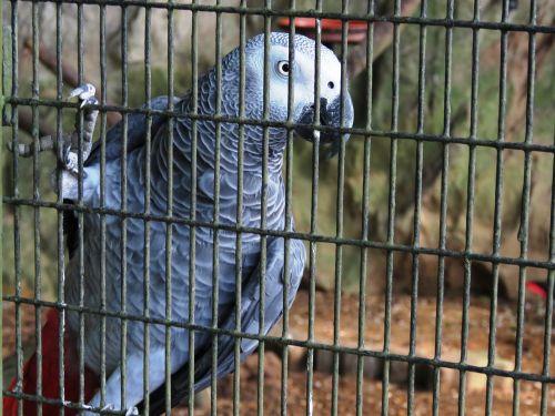 parrot green jail