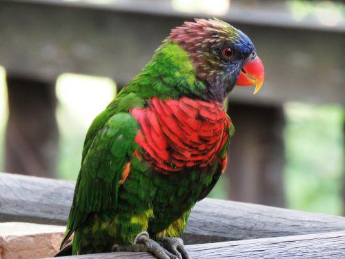 parrot macaw beautiful bird
