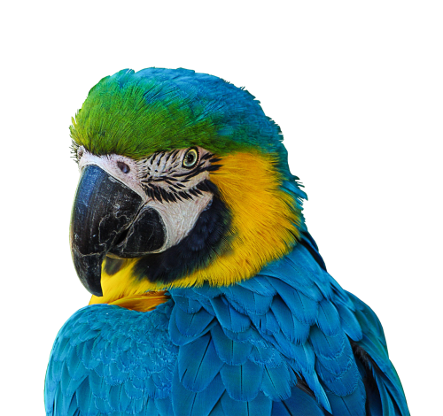 parrot colorful plumage