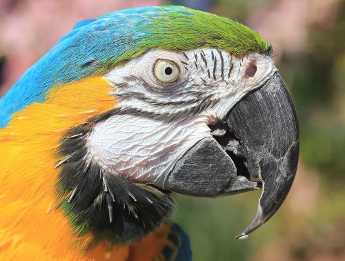 parrot macaw blue macaw