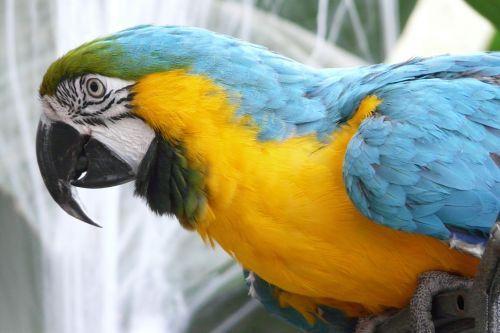 parrot bird plumage
