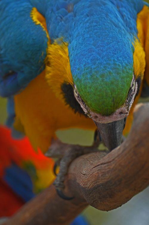 parrot bird colorful