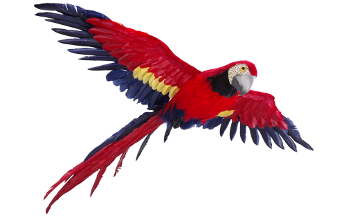 parrot isolated flight