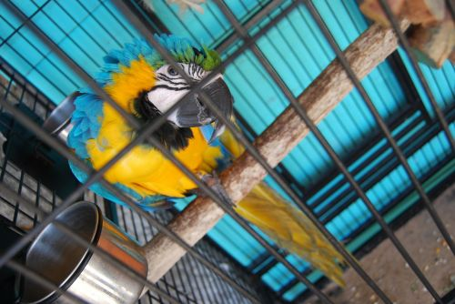 parrot cage birdcage