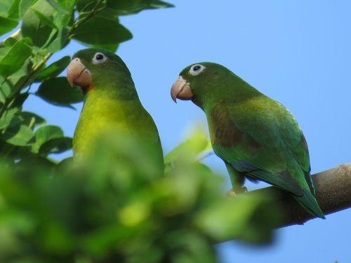 parrot bird ave