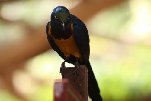 parrot colorful tiefenschärfe